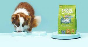 YummyPets : cartes cadeaux Amazon et fournitures pour chats et chiens à gagner
